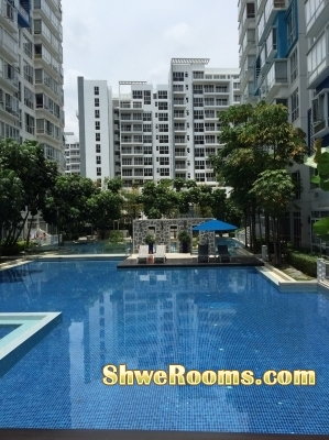 Available one common room at Woodlands - Condo